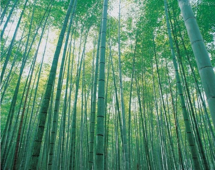 Bamboo seed