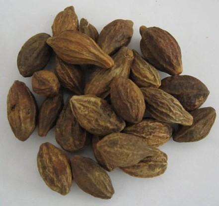 Terminalia Chebula Fruit