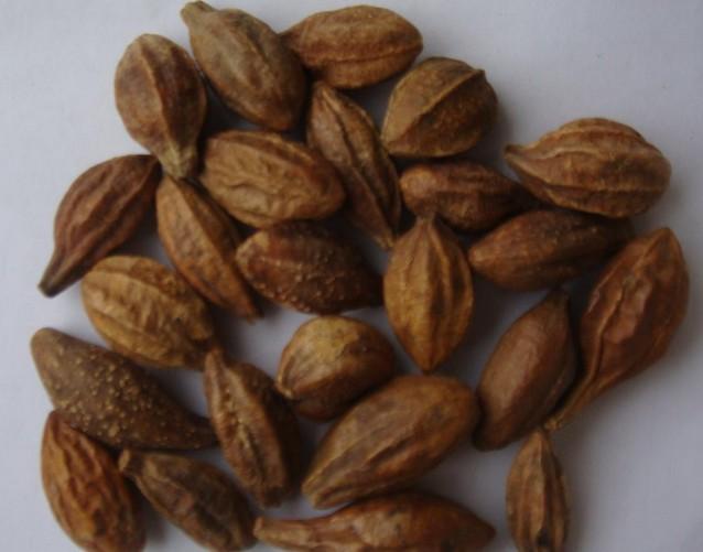 Terminalia Chebula(Dried Fruit)