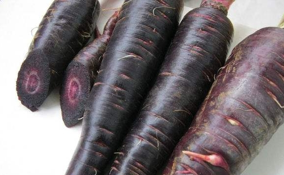 Black carrot seed