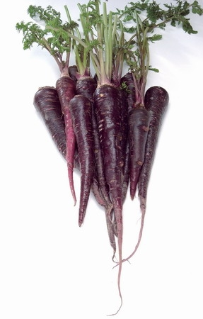 Purple Carrot seed