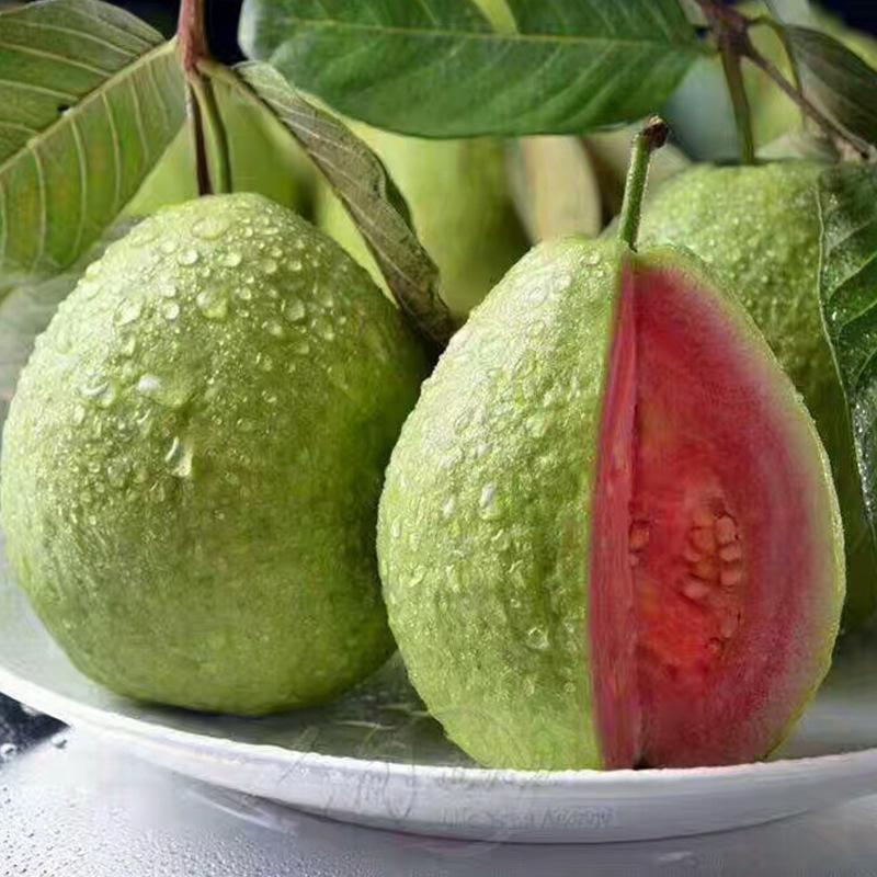 Psidium guajava seed pink fruit