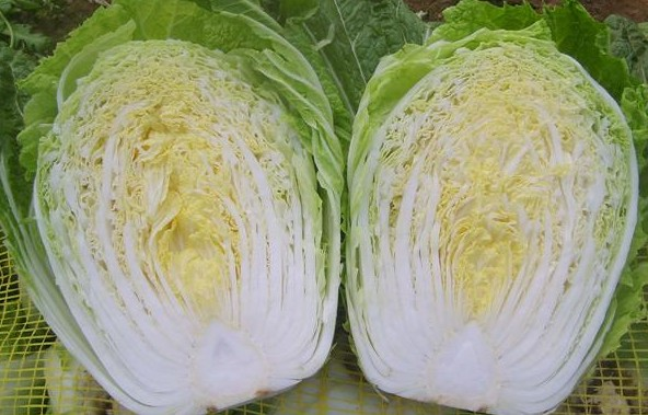 Chinese Cabbage seed
