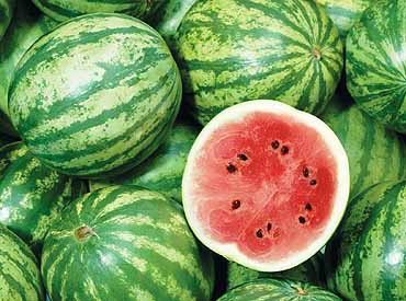 Crimson Sweet Watermelon seed Citrullus lanatus
