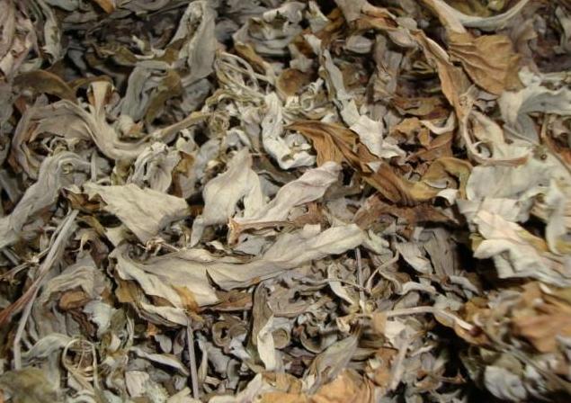 Mugwort Tea Artemisia vulgaris Tea | ZHONG WEI Horticultural