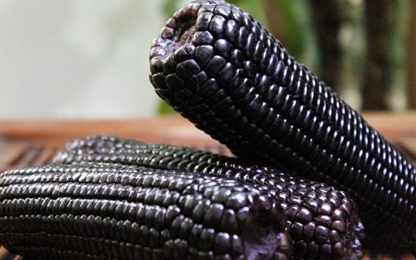 Purple Corn Seeds
